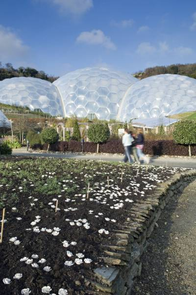 clay flower installation at the Eden Project