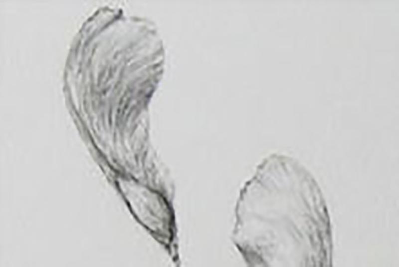 seed drawing