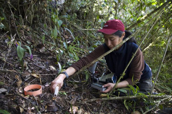 gathering soil in the rainforest