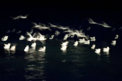 gulls in harbour at night