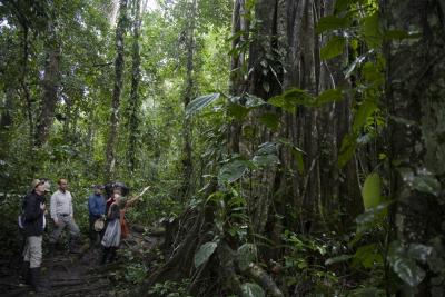 figures dwarfed by trees in the Amazon