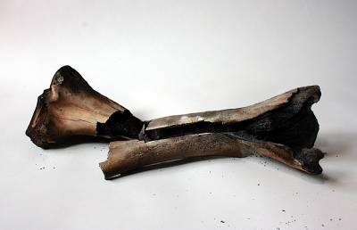 charred bone