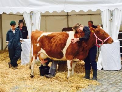 woman hugs milking cow