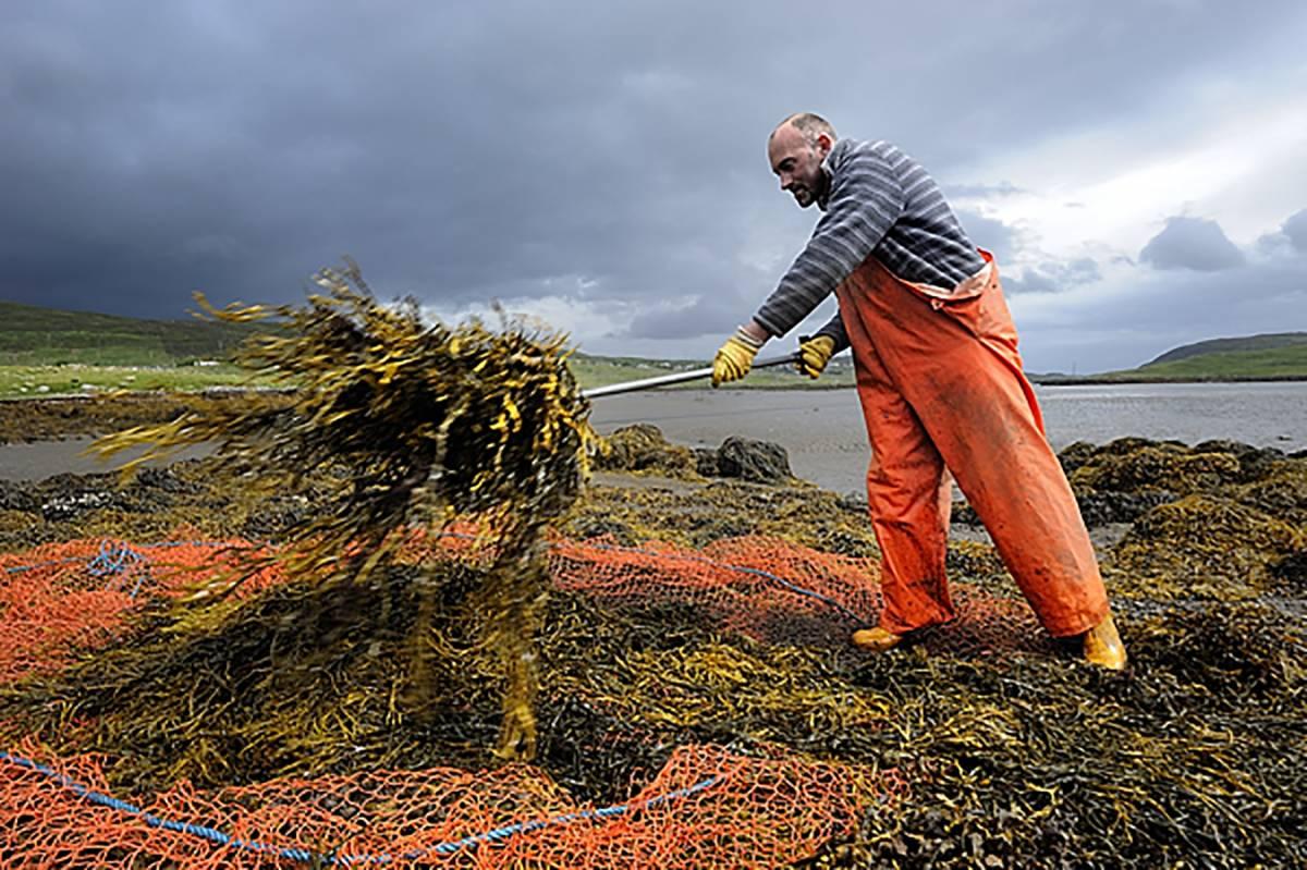 man shovelling seaweed