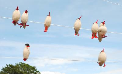 knitted birds on wire
